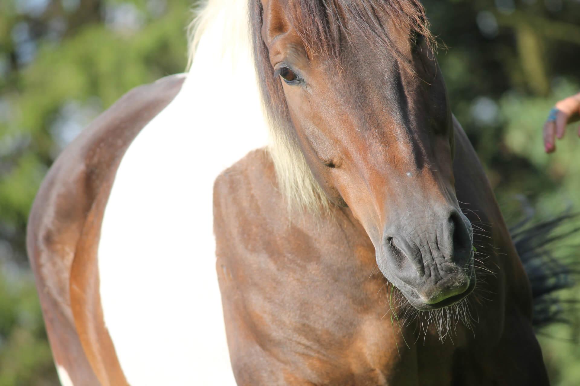 Paardencoaching, equitherapie, therapie met paarden, coaching met paarden