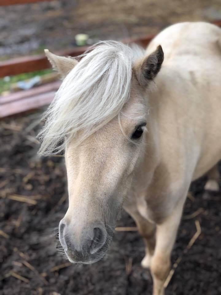 coaching met paarden, paardencoaching, coaching